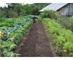 Ofer servicii diverse de gradinarit, amenajari horticole si consultanta